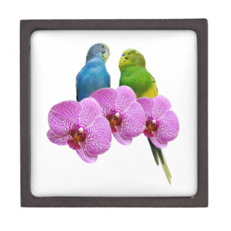 Caja De Regalo Budgie con la orquídea púrpura