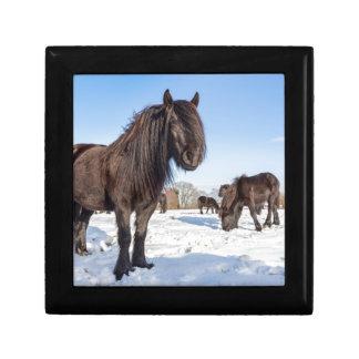 Caja De Regalo Caballos negros del frisian en nieve del invierno