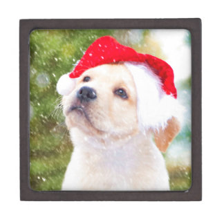 Caja de regalo del perrito del labrador retriever