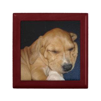 Caja de regalo del perrito el dormir
