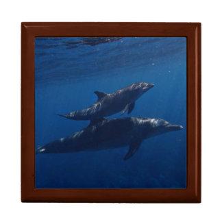 Caja De Regalo Delfínes