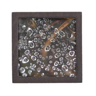 Caja De Regalo Descensos de rocío en una red de la araña