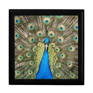 Caja De Regalo El pavo real de Pedro empluma el Peafowl salvaje