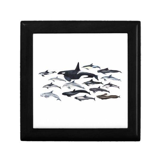 Caja De Regalo Familia de los delfines: orcas, delfines, marsopas