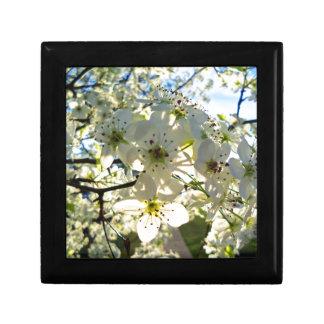 Caja De Regalo Flores del cerezo de Yoshino