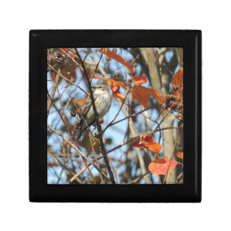 Caja De Regalo Gorjeo Amarillo-rumped en invierno