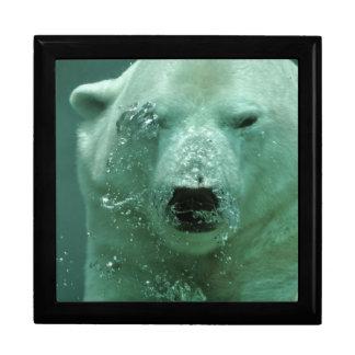 Caja De Regalo Oso polar debajo del agua