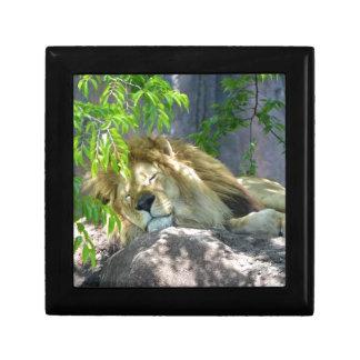 Caja De Regalo siesta del león
