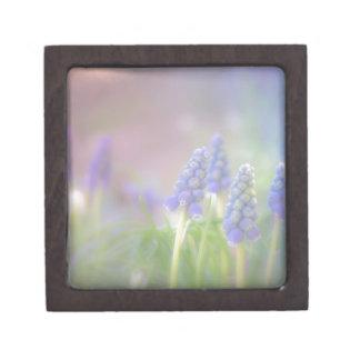 Caja De Regalo Sueño púrpura