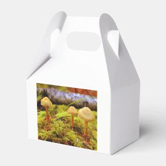 Caja del favor de fiesta de la foto de la seta
