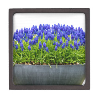 Caja gris de la flor del metal con los jacintos de
