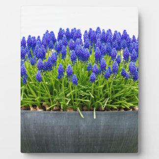 Caja gris de la flor del metal con los jacintos de placa expositora