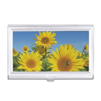 Caja Para Tarjetas De Visita girasol en flor colorido del verano del cielo azul