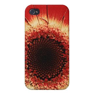 caja roja del iPhone de la margarita del gerbera iPhone 4 Cárcasas