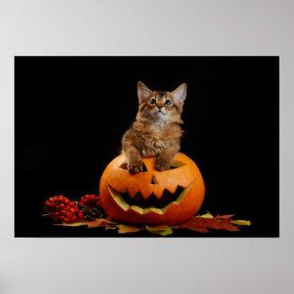 Calabaza asustadiza de Halloween y gatito somalí Póster
