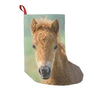 Calcetín Navideño Pequeño Foto frontal linda de la cabeza de caballo del