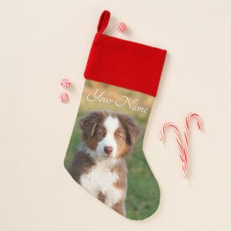 Calcetín Navideño Tri perrito australiano rojo lindo del perro de