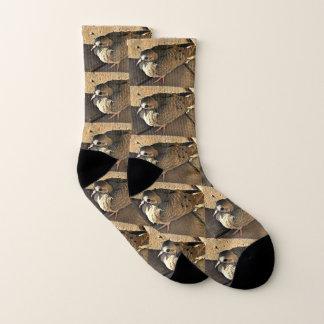 Calcetines de la paloma de Sonoran
