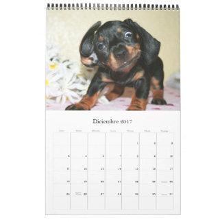 Calendario 2017 Puppy Dachshunds