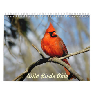Calendario salvaje de Ohio de los pájaros