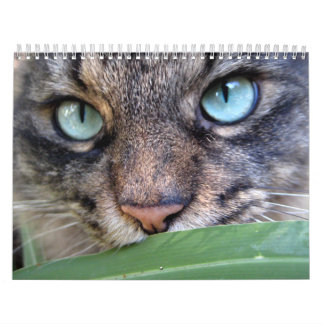 Calendarios del gato de Coon de Maine