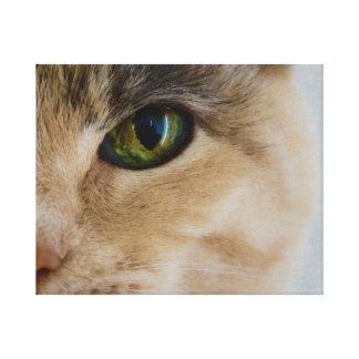 Calicó de ojos verdes lienzo