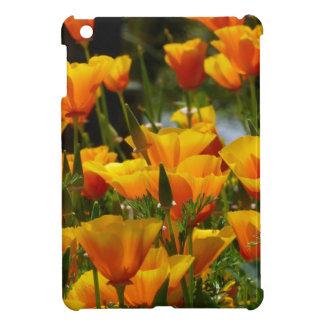 California anaranjada Poppies_3.1