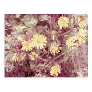 Calor del verano, flores salvajes amarillas postal