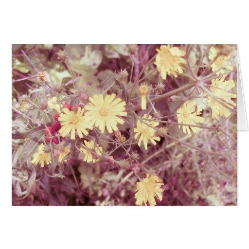 Calor del verano, flores salvajes amarillas felicitación