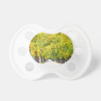 Calzada por completo de árboles chupetes para bebes