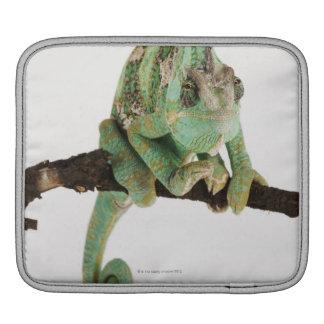 Camaleón audazmente coloreado con característica manga de iPad