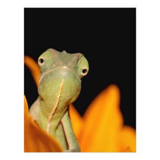 camaleón folleto 21,6 x 28 cm