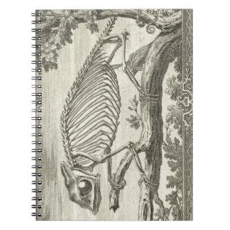 Camaleón Libro De Apuntes