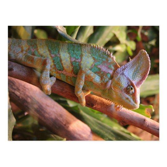 camaleón multicolor postal