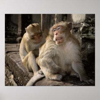 Camboya, Angkor Wat. Macaques atados largos Póster