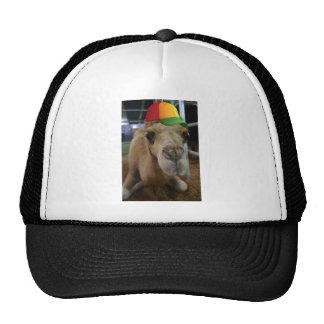 Camello lindo con una gorrita tejida gorros bordados