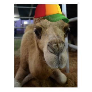 Camello lindo con una gorrita tejida postal