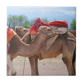 Camellos Azulejo Cuadrado Pequeño