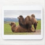 Camellos bactrianos tapete de raton