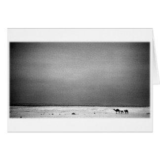 Camellos en el desierto - Jordania 1990 Tarjeta