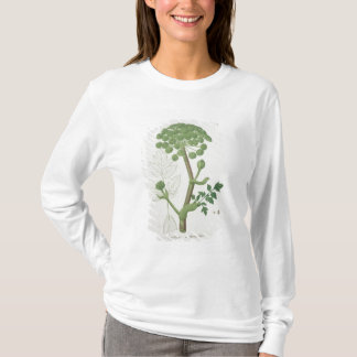 Camiseta Angélica Archangelica de 'Phytographie Medicale