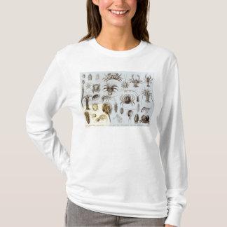 Camiseta Crustáceos y arácnidos