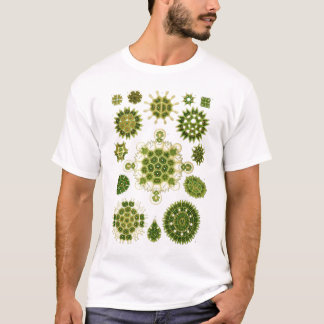 Camiseta de las algas