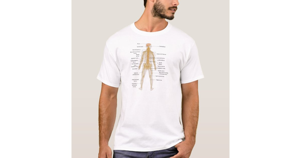 Camiseta Diagrama del sistema nervioso del cuerpo humano | Zazzle.es