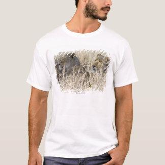 Camiseta Dos leones ocultados en la hierba seca, nacional