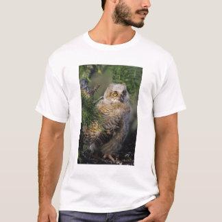 Camiseta Gran búho de cuernos, virginianus del bubón, joven