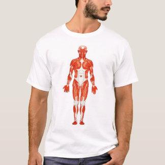 Camiseta Hombre masculino de la musculatura
