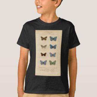Camiseta Impresión del vintage - Polyommatus - polillas y