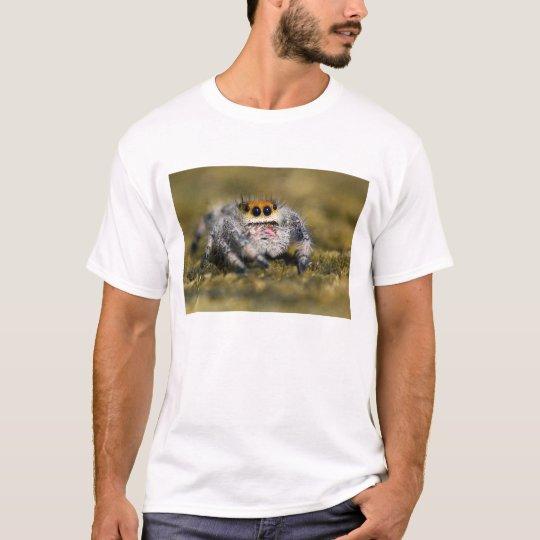Camiseta Los E.E.U.U., la Florida. Primer de la araña de