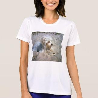 Camiseta maltés en la playa